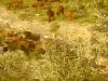 Al Ladino goats